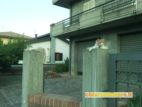 gattini (1)