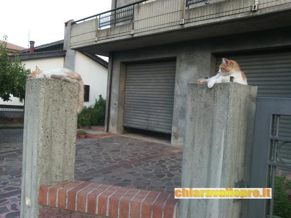gattini (2)