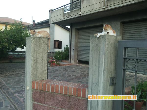 gattini (3)