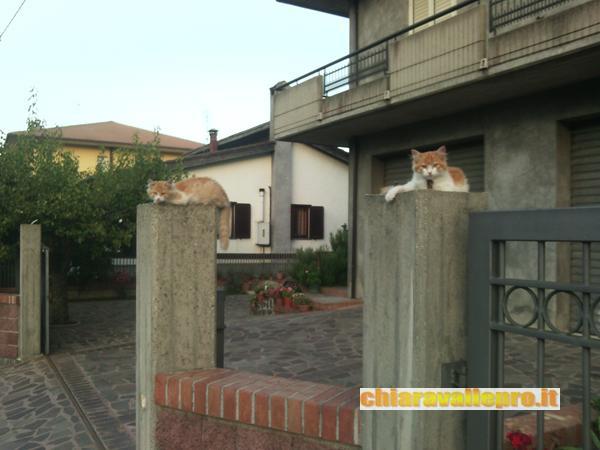 gattini (4)