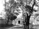 Contrada Foresta e la festa della Madonna della Pietra - Contrada Foresta: natura e sito - di Francesco Squillace