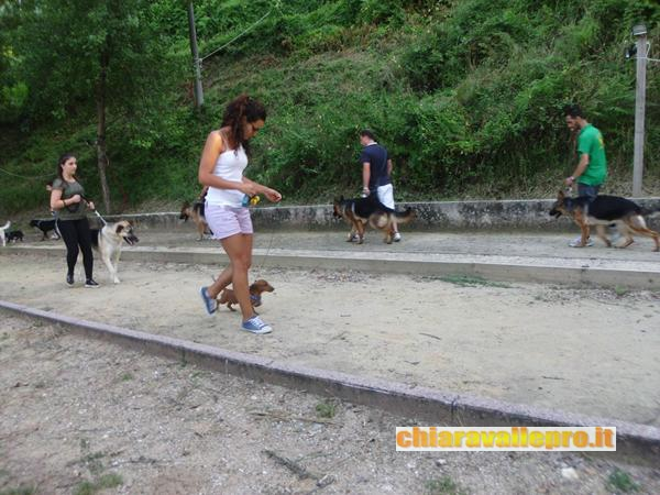 dogs (11)
