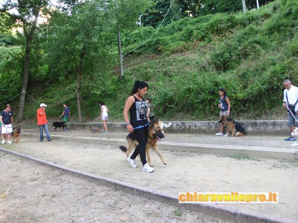 dogs (7)