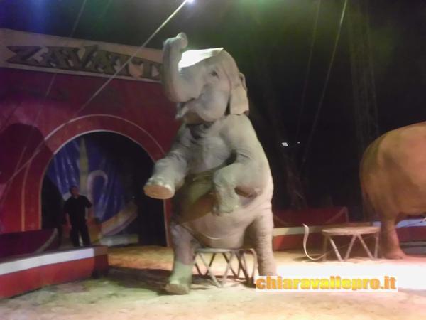 circo (24)