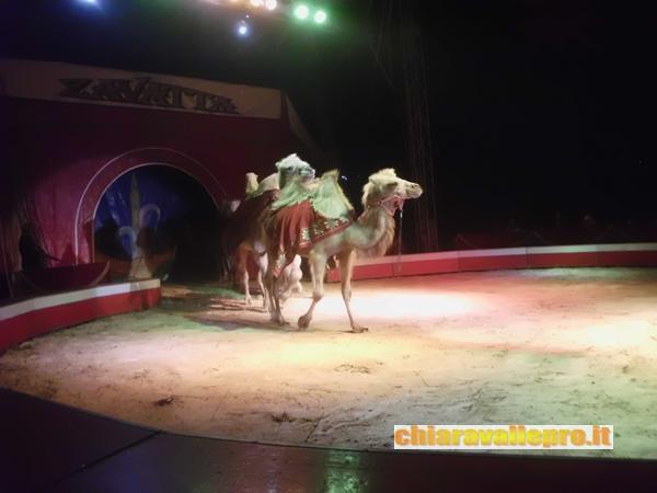 circo (42)