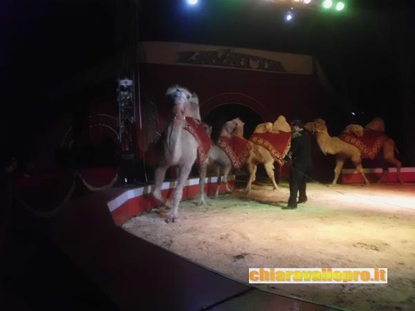 circo (44)