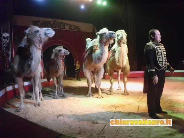 circo (47)