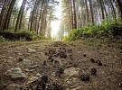 """Cardinale (Cz), domenica 13 agosto, seconda edizione del """"Trekking day"""", alla riscoperta del territorio del Parco regionale delle Serre."""